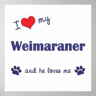 I Love My Weimaraner (Male Dog) Poster