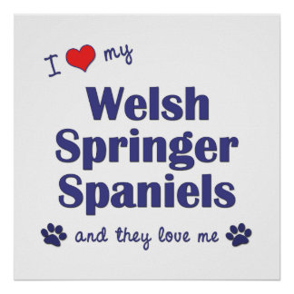 I Love My Welsh Springer Spaniels (Multiple Dogs) Poster
