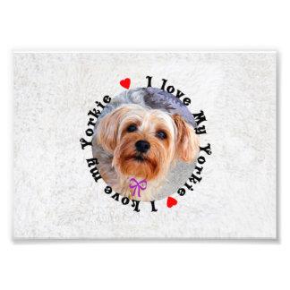 I love my Yorkie Female Yorkshire Terrier Dog Photograph