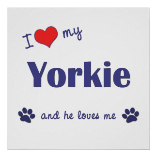 I Love My Yorkie (Male Dog) Poster