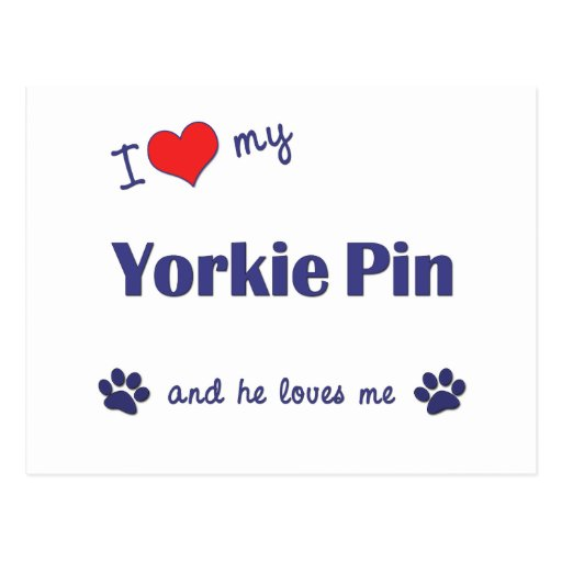 I Love My Yorkie Pin (Male Dog) Postcard