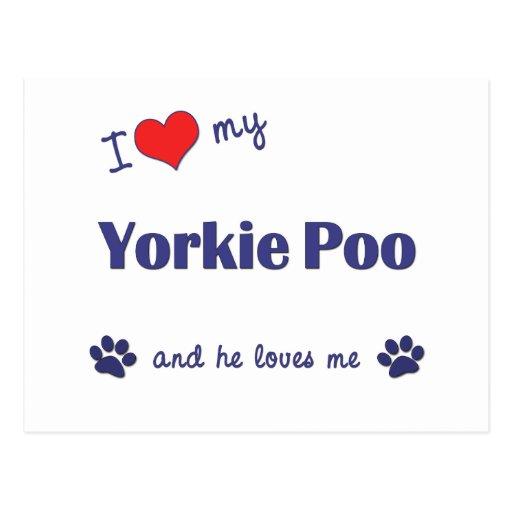 I Love My Yorkie Poo (Male Dog) Postcards
