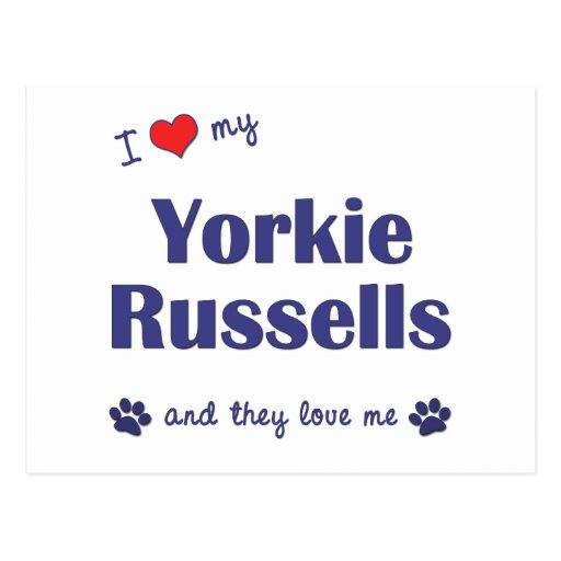 I Love My Yorkie Russells (Multiple Dogs) Post Card