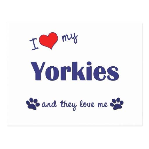 I Love My Yorkies (Multiple Dogs) Postcards