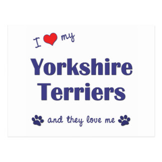 I Love My Yorkshire Terriers (Multiple Dogs) Postcards