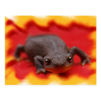 I Love Newts Postcard