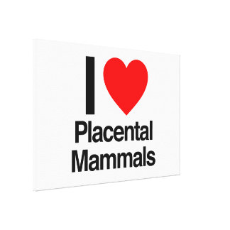 i love placental mammals stretched canvas print