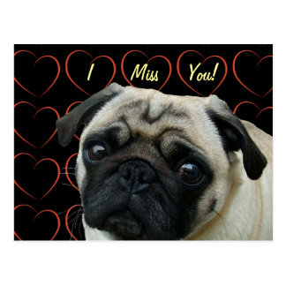 I Love Pugs with Hearts Postcard