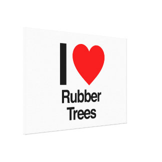 i love rubber trees stretched canvas prints