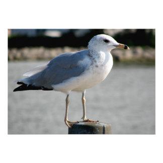 I love Seagulls! Custom Invites