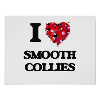 I love Smooth Collies Poster