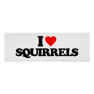 I LOVE SQUIRRELS POSTERS