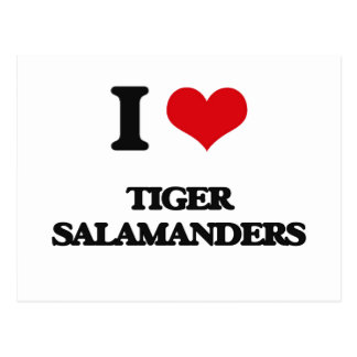 I love Tiger Salamanders Postcard