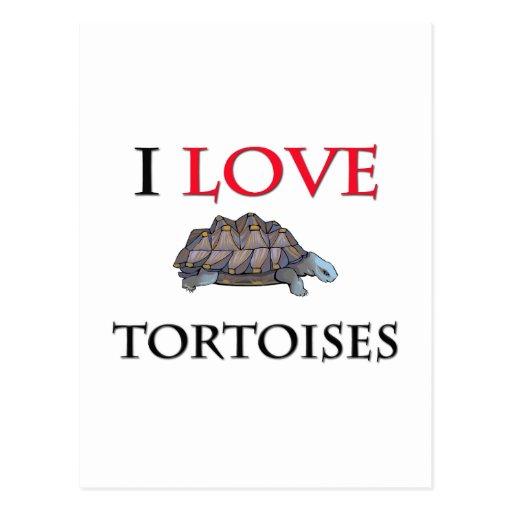 I Love Tortoises Postcard