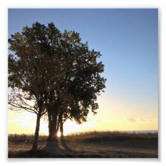 I Love Trees Mornin Photo Print