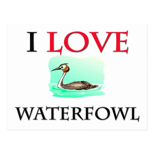 I Love Waterfowl Post Cards