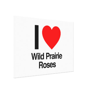 i love wild prairie roses canvas prints