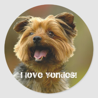 I love Yorkies! Sticker
