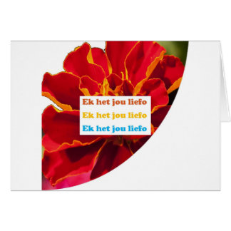 I LOVE YOU - in Afrikaans :  Language n Culture Greeting Card