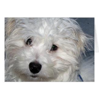 I Love You Puppy Card
