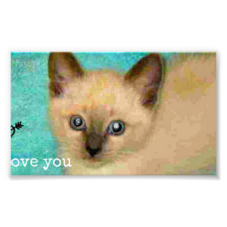 I love you siamese kitten photographic print