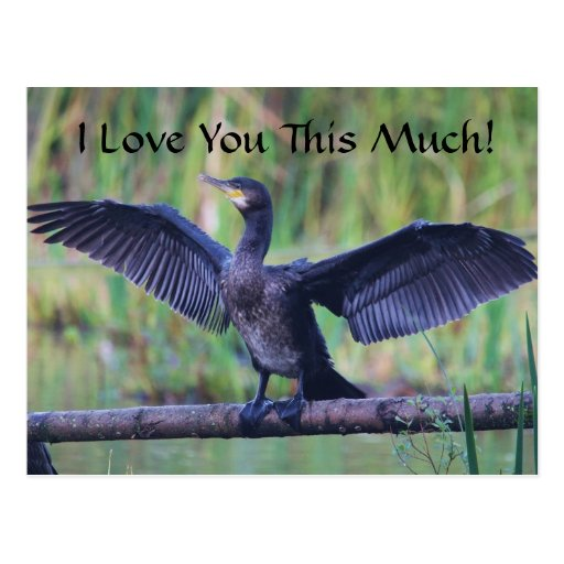 I Love You This Much - Cormorant Postcards