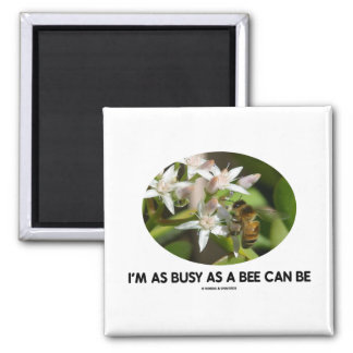 I m As Busy As A Bee Can Be Bee On White Flower Magnet