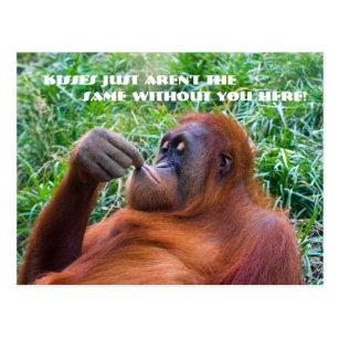 Funny Miss You Postcards Zazzle Uk