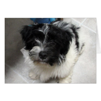 I Miss You - Havanese Puppy Card