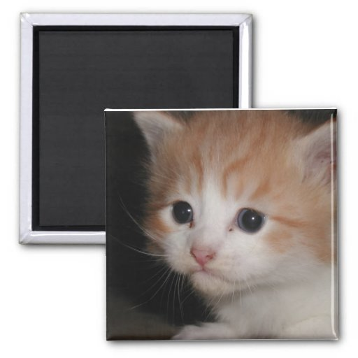 I miss you kitty Magnet