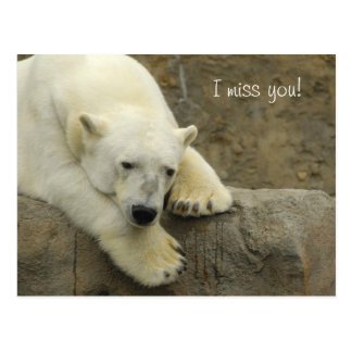 I miss you - Polar Bear Postcard