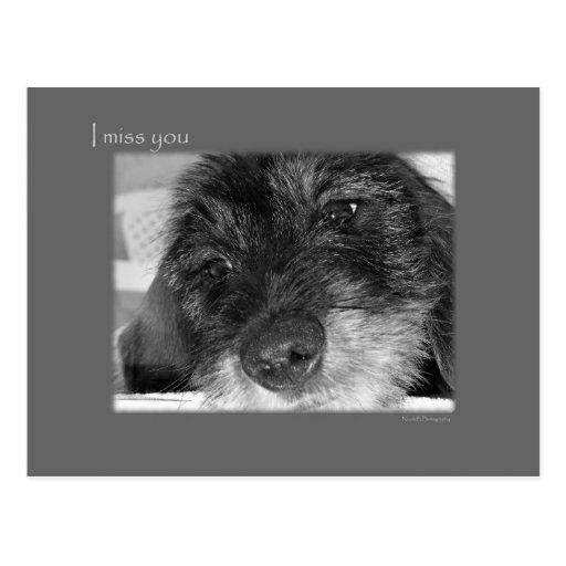 I miss you - Sad Dachshund Postcard