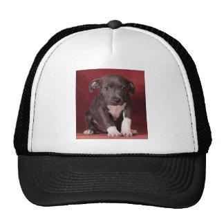 I need a loving home cap