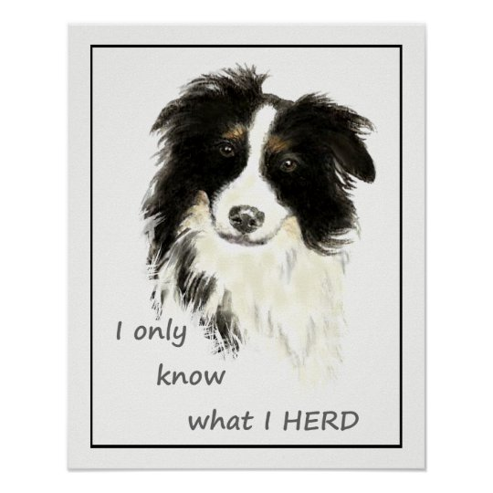 """I only know what I HERD"" ""Border Collie"""