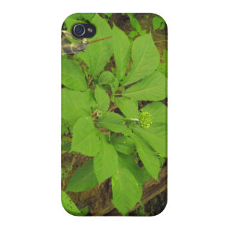 I phone case with Ginseng plant on it. Case For iPhone 4