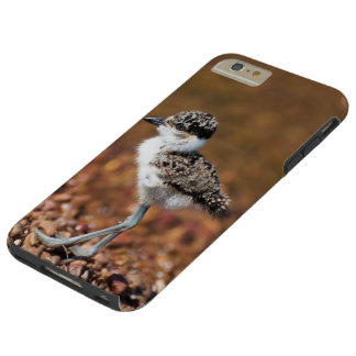 I phone S6 Protective Case with Lapwing Chick