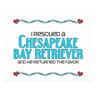 I Rescued a Chesapeake Bay Retriever (Male Dog) Postcard