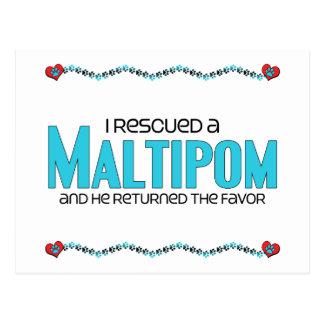 I Rescued a Maltipom (Male) Dog Adoption Design Post Card