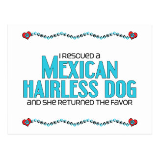 I Rescued a Mexican Hairless Dog (Female Dog) Postcard