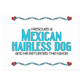 I Rescued a Mexican Hairless Dog (Male Dog) Postcard
