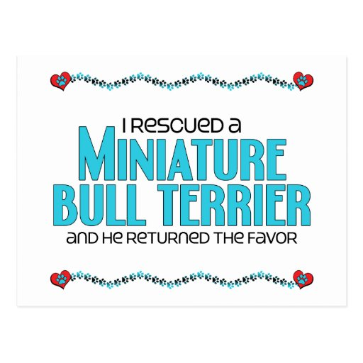 I Rescued a Miniature Bull Terrier (Male Dog) Postcard
