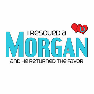 I Rescued a Morgan Male Horse Cut Out