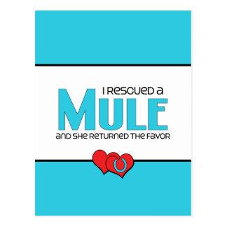 I Rescued a Mule (Female Mule) Postcard