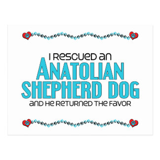 I Rescued an Anatolian Shepherd Dog (Male Dog) Postcard