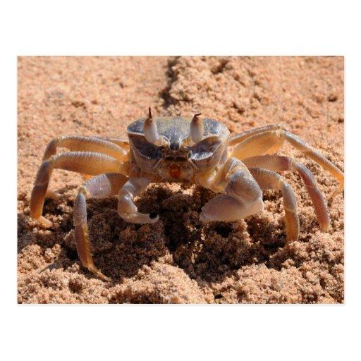 I see you - crab at the beach close up postcard