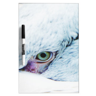 I see you Dry-Erase whiteboards
