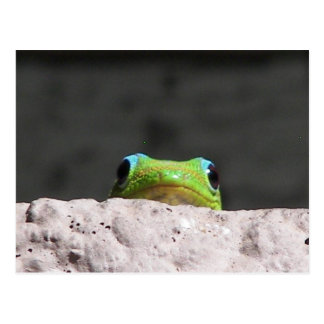 I see you gecko postcard