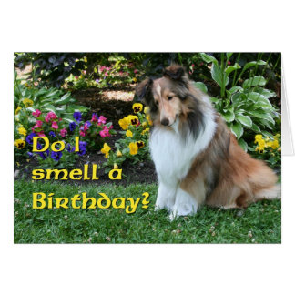 I Smell a Birthday Sheltie Greeting Card