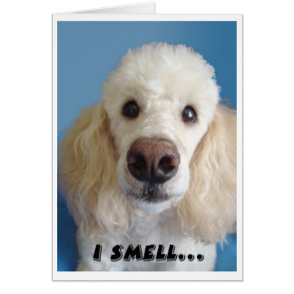 I Smell An Old Fart White Poodle With Big Nose Card