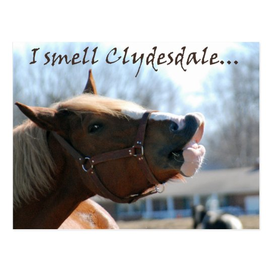 I smell clydesdales postcard